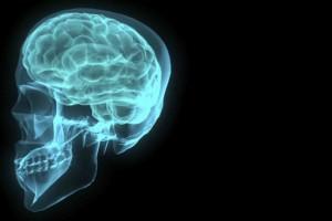 cerebro-20130123190604