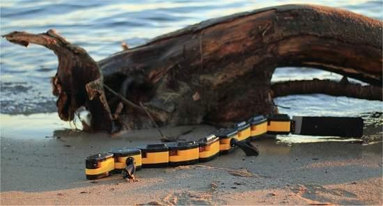 010180130510-salamandra-robotica-2