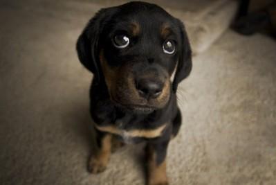 fezes-de-cachoror-20130510121242